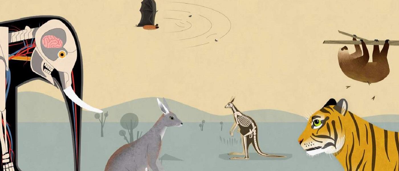 App Tiere: Tinybop Säugetiere