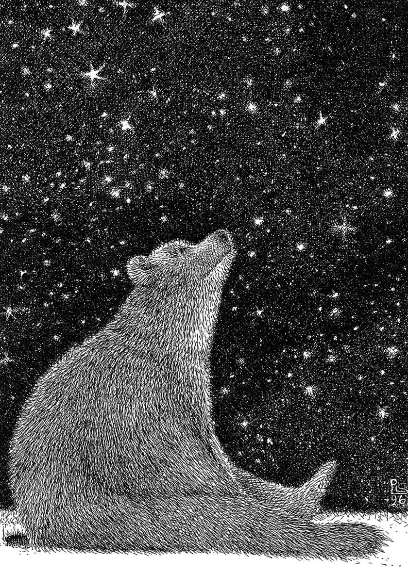 """Der Bär unter dem Sternenhimmel aus """"Von Fuchs, Wolf und Bär"""" von Pirkko-Liisa Surojegin"""