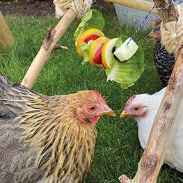 """Foto aus """"Zuhause ist, wo meine Hühner sind"""" von Tanja Berlin."""